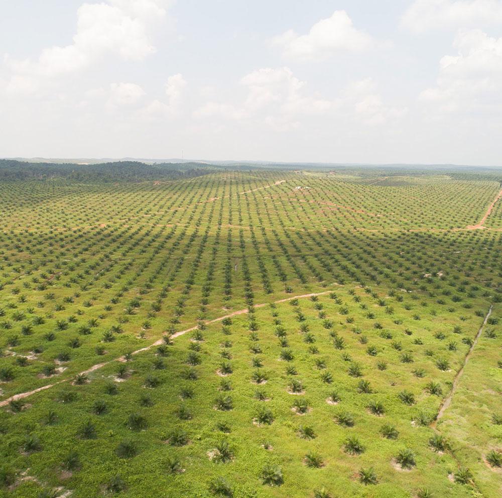 Plantation Fgv Holdings Berhad